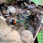 10-foto-reserva-natural-anahuac-turismo-valle-del-cauca