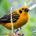 13-foto-reserva-natural-anahuac-turismo-valle-del-cauca