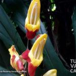 16-foto-reserva-natural-anahuac-turismo-valle-del-cauca