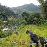 2-foto-reserva-natural-anahuac-turismo-valle-del-cauca