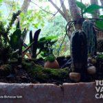 9-foto-bichacue-yath-turismo-valle-del-cauca