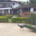 Fotos finca hotel campestre villa heidy calima turismo valle del cauca colombia8