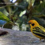 Fotos refugio corazones verdes dapa turismo valle del cauca colombia2