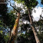 Foto la reserva nacional forestal bosque de yotoco turismo valle del cauca colombia (19)