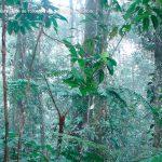 Foto la reserva nacional forestal bosque de yotoco turismo valle del cauca colombia (23)