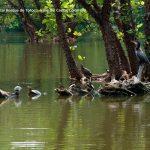 Foto la reserva nacional forestal bosque de yotoco turismo valle del cauca colombia (28)