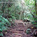 Foto la reserva nacional forestal bosque de yotoco turismo valle del cauca colombia (31)