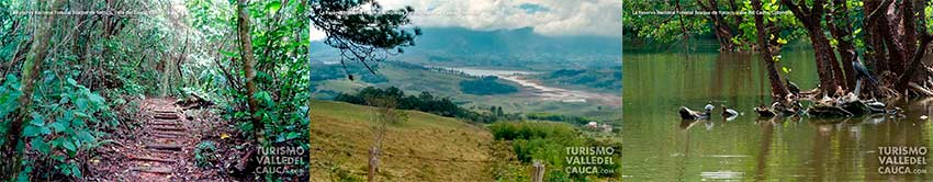 Foto general la reserva nacional forestal bosque de yotoco turismo valle del cauca colombia