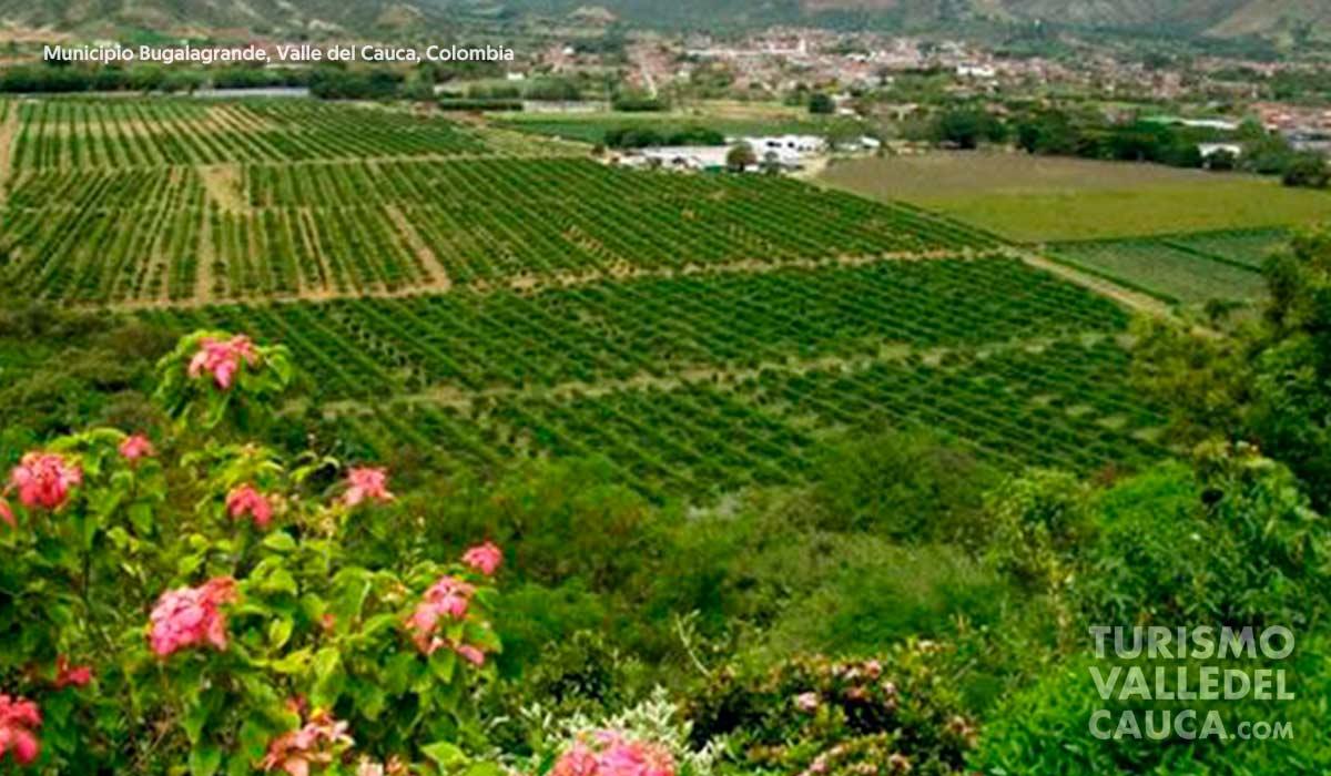 Foto municipio bugalagrande turismo valle del cauca colombia (7)