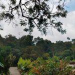 La pinera pizzeria dapa turismo valle del cauca colombia (12)