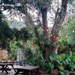 La pinera pizzeria dapa turismo valle del cauca colombia (3)