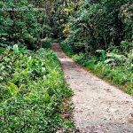 San cipriano buenaventura turismo valle del cauca colombia (6)
